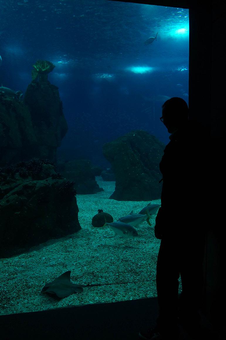 Oceanarium - ombres chinoises