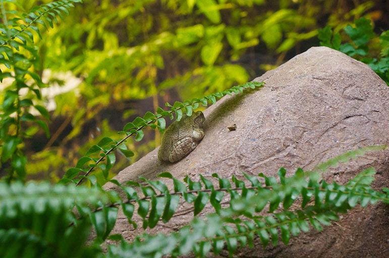 Oceanarium - grenouille