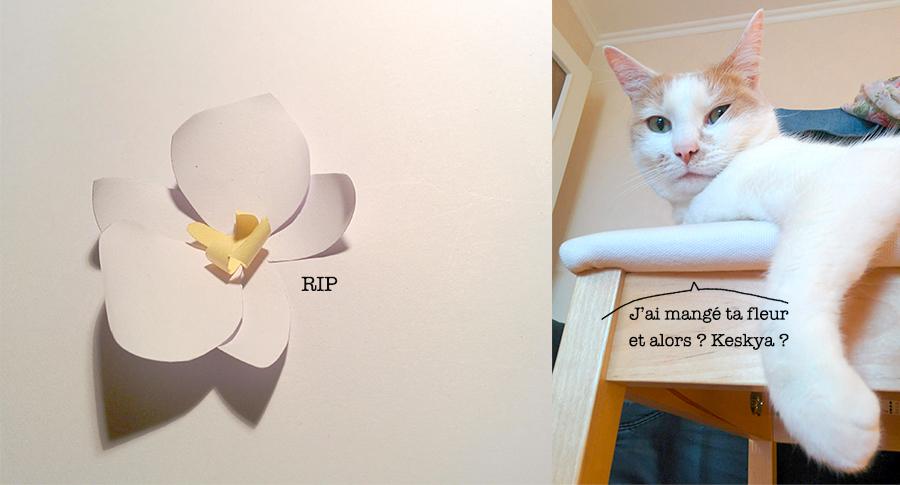 étape orchidée, chat coupable